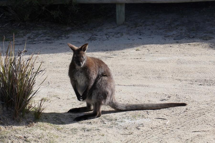 Australie hors de prix