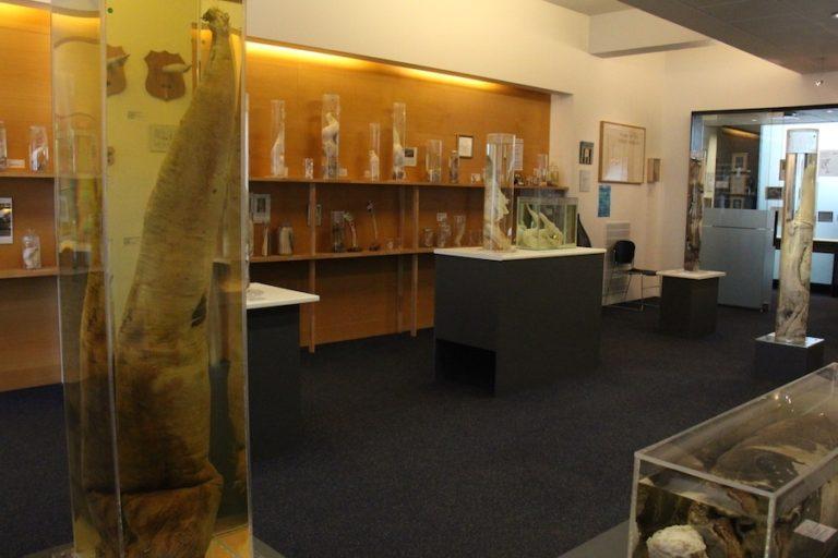musee-islande-6