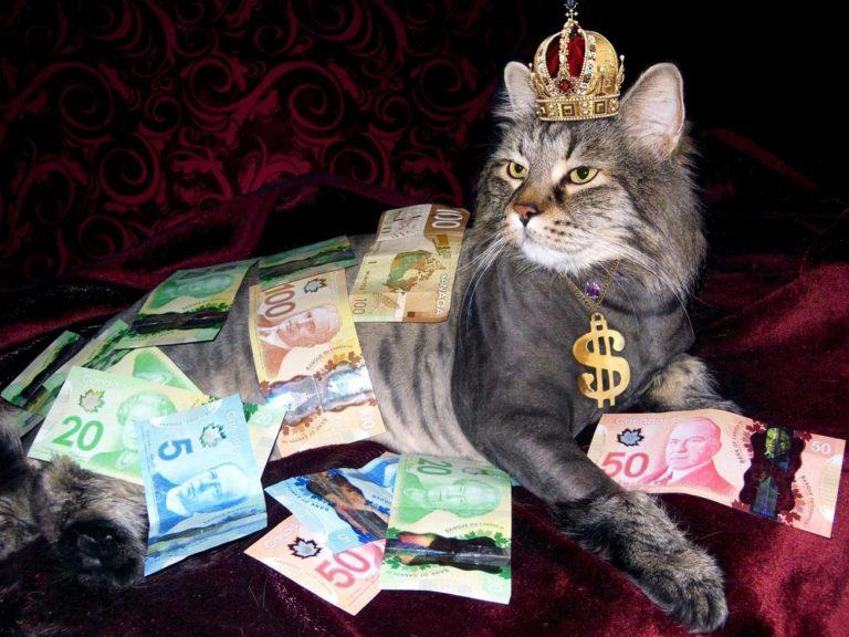 chat couvert d'argent