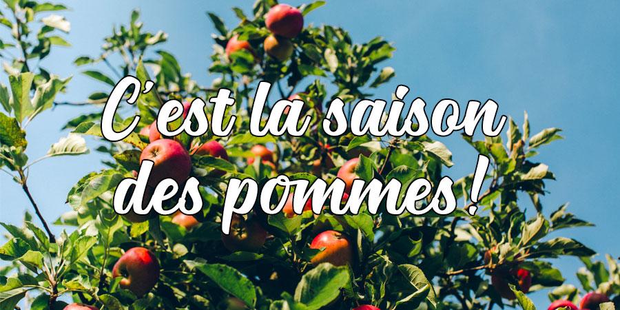 C'est la saison des pommes!