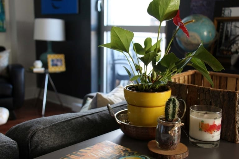 vase - achats pour la maison Dollarama