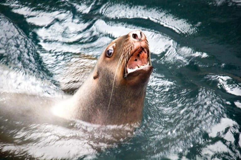 Aquarium de Vancouver budget de voyage Vancouver