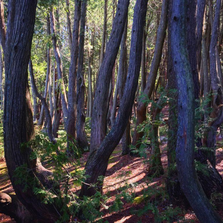La forêt enchantée au lieu historique national du fort Témiscamingue