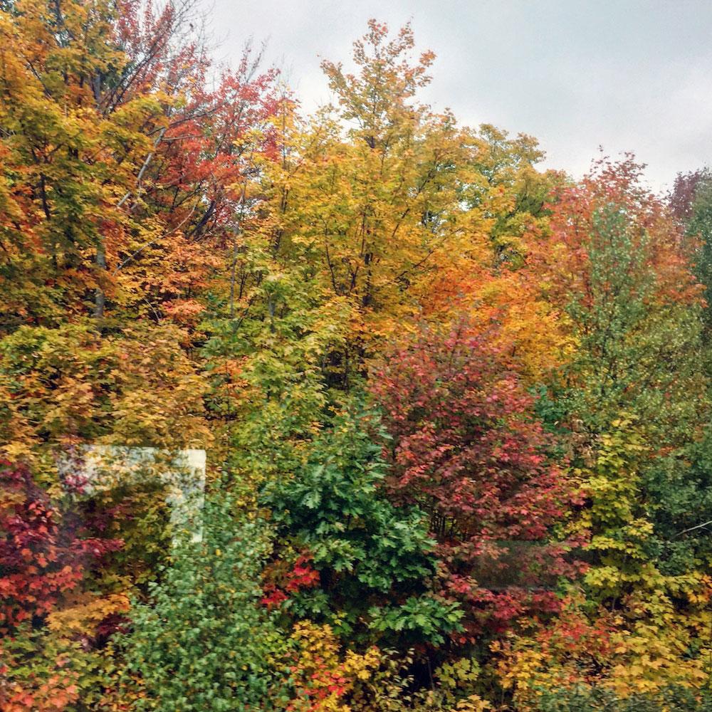 Paysage du train Montréal-Senneterre pendant la saison des couleurs