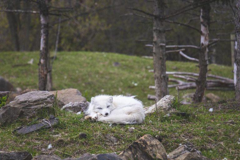 Animal qui dort