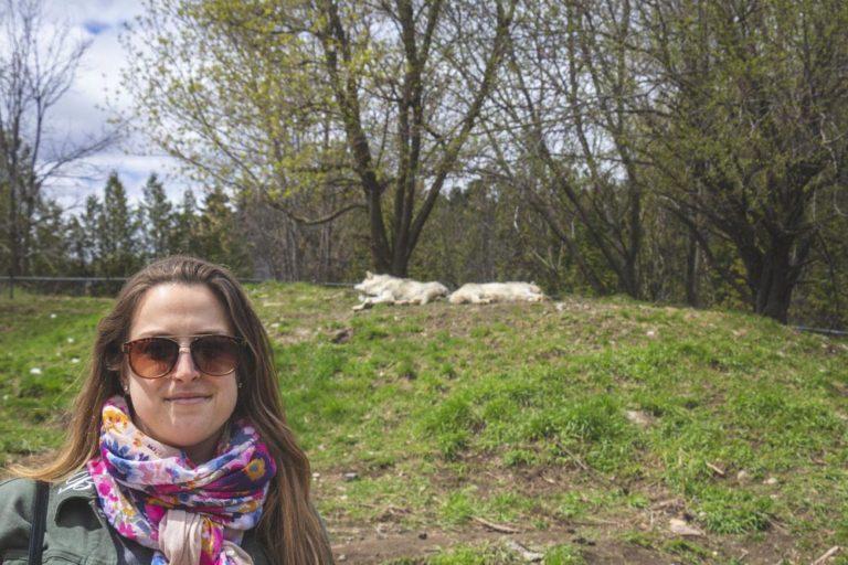 Moi avec les loups au Zoo Ecomuseum