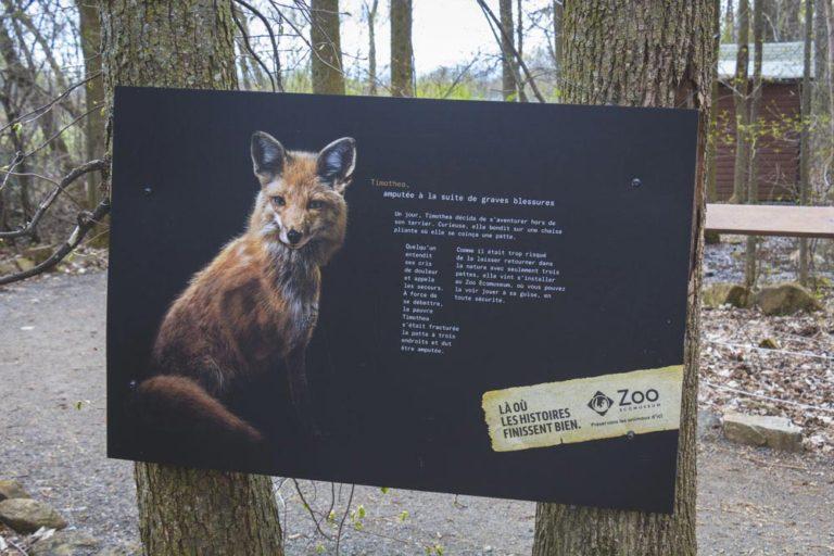 Pancarte au sujet de Timothea, animal amputé