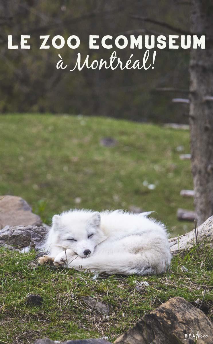 Image pour Pinterest : Zoo Ecomseum