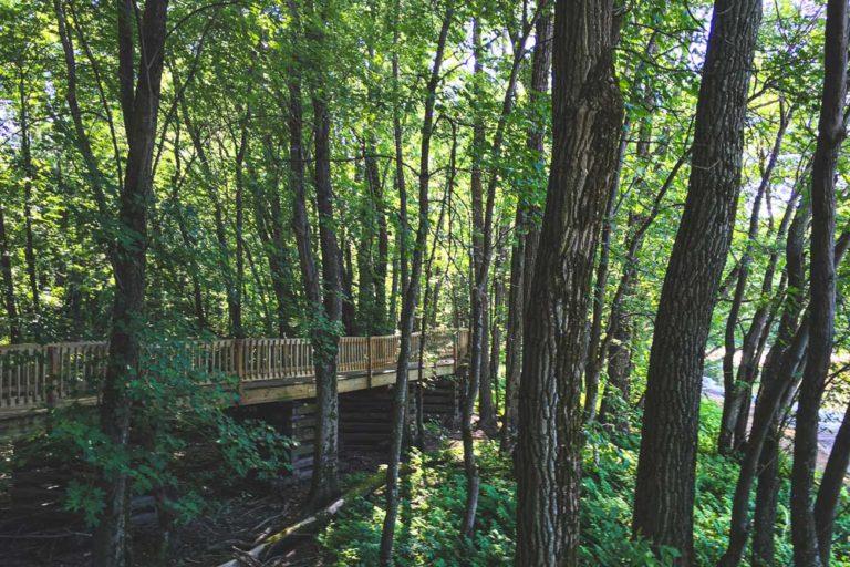 forêt à l'île Saint-Quentin