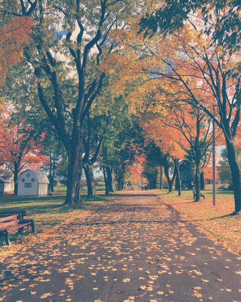 Sentier à la Maison Mère l'automne